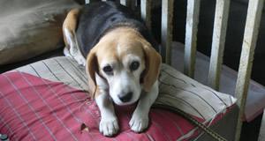 生活館の看板犬