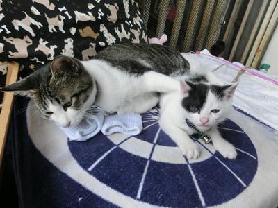 生活館の看板猫